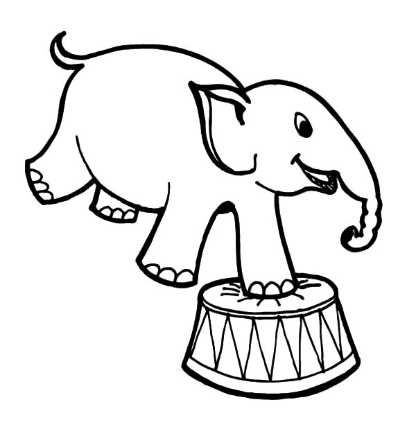 Circus Elephant, : How to Draw Circus Elephant Coloring Pages