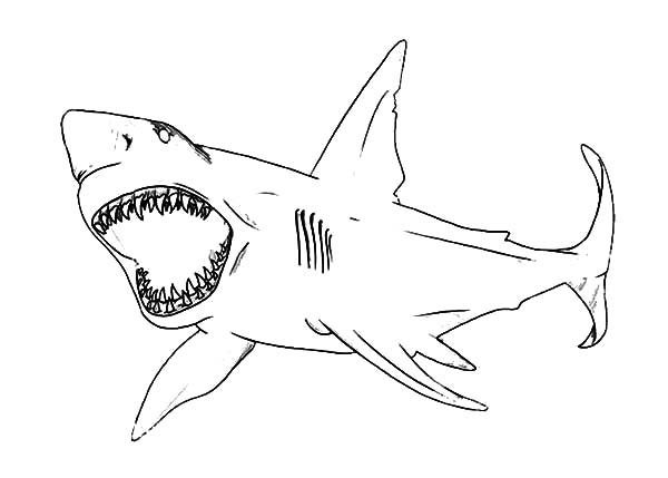 Jaws, : How to Draw Shark Jaws Coloring Pages