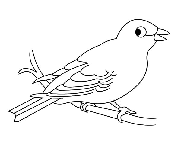 Hungry Canary Bird Coloring Pages