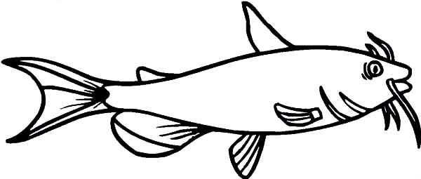Catfish, : Juvenile Catfish Coloring Pages