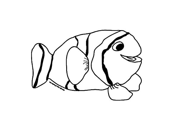 Clown Fish, : Kids Drawing Clown Fish Coloring Pages