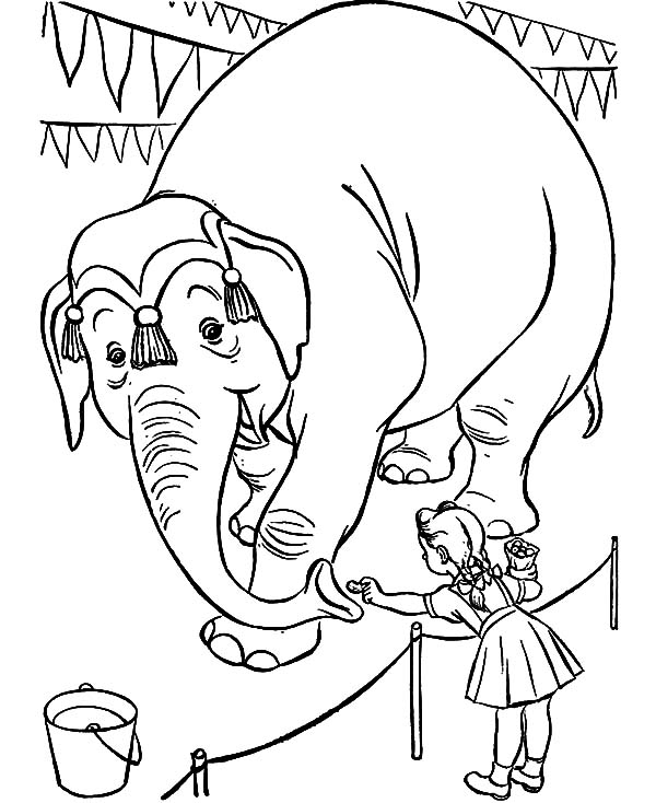 Circus Elephant, : Little Feed Circus Elephant with Nuts Coloring Pages
