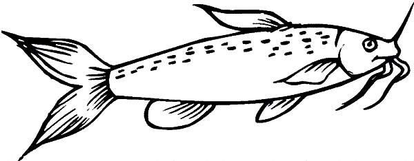 Missouri Catfish Coloring Pages