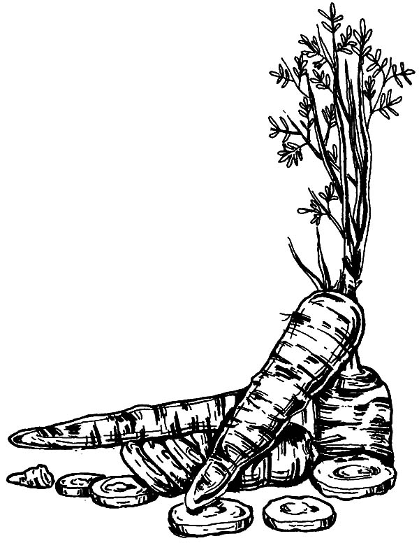 Carrot, : Pencil Sketch Carrot Coloring Pages