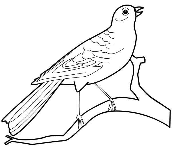 Canary Bird, : Preschool Kids Canary Bird Coloring Pages