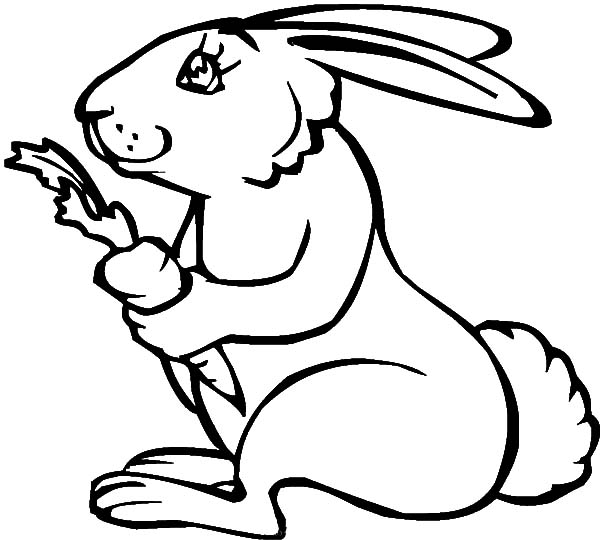 Carrot, : Rabbit Holding Carrot Coloring Pages