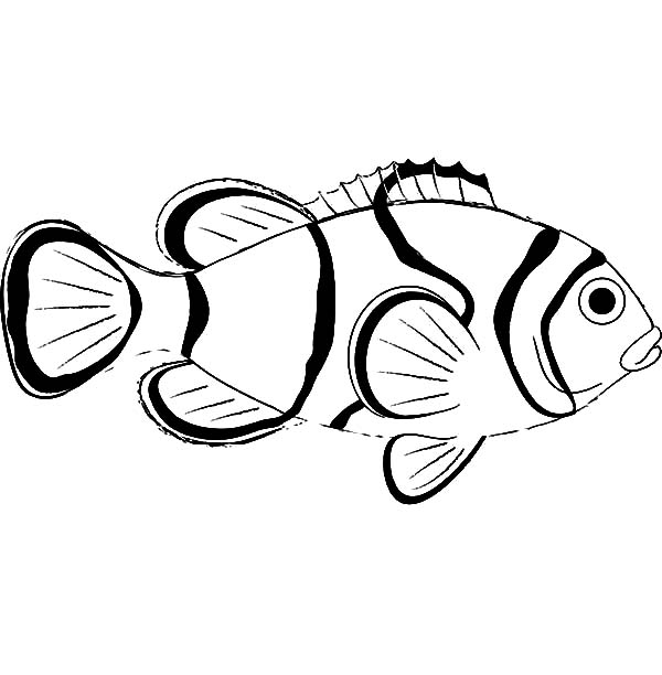 Free How To Draw Clown Fish Coloring Pages Clown Fish Coloring Pages