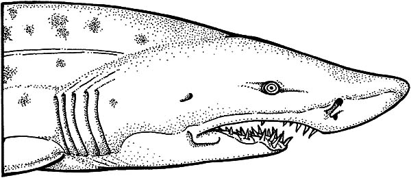Jaws, : Shark Jaws Coloring Pages for Kids