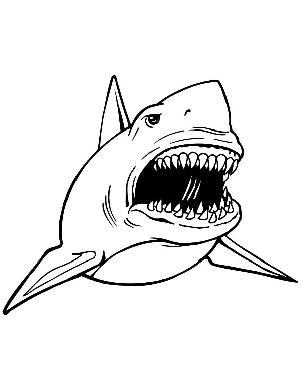 Terifieying jaws free coloring pages for Free printable shark coloring pages