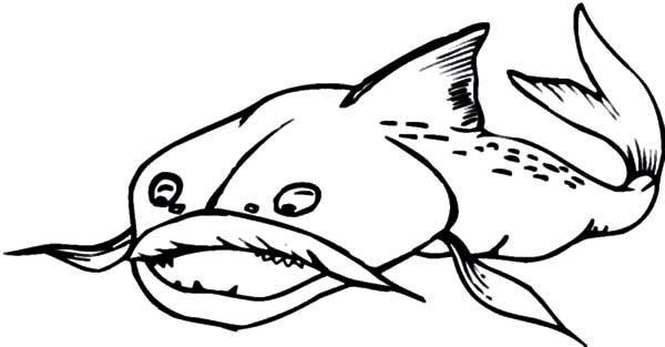 Catfish, : Terrifying Catfish Coloring Pages