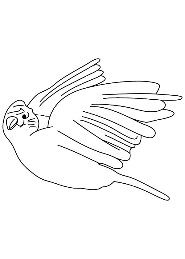 Canary Bird, : White Canary Bird Coloring Pages