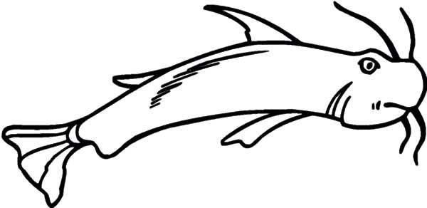 Catfish, : Wild Life Catfish Coloring Pages