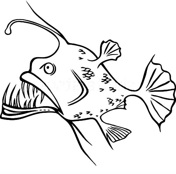 It is a photo of Punchy Angler Fish Coloring Page
