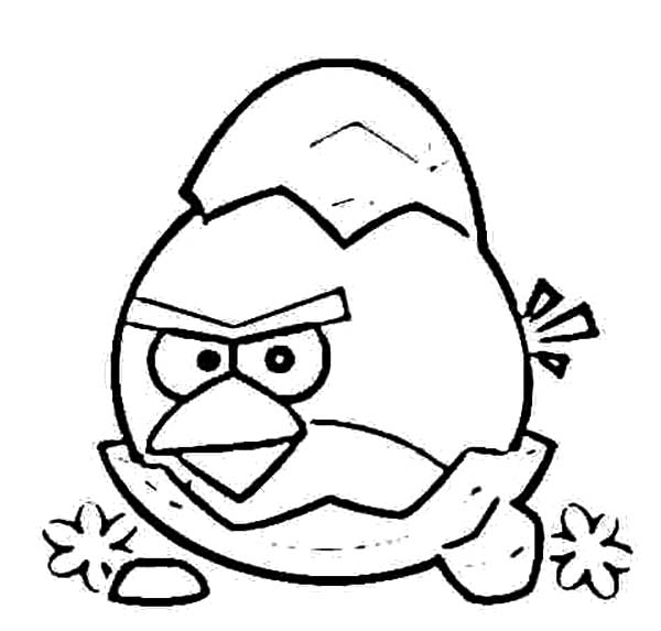 bird eggs coloring pages - photo#31