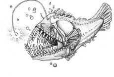 Dangerous Deep Sea Fish Angler Fish Coloring Pages : Best ...
