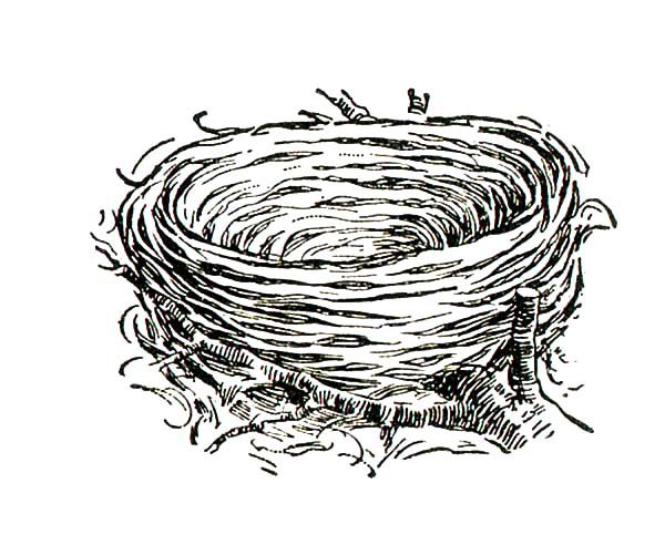 It is an image of Modest nest coloring pages
