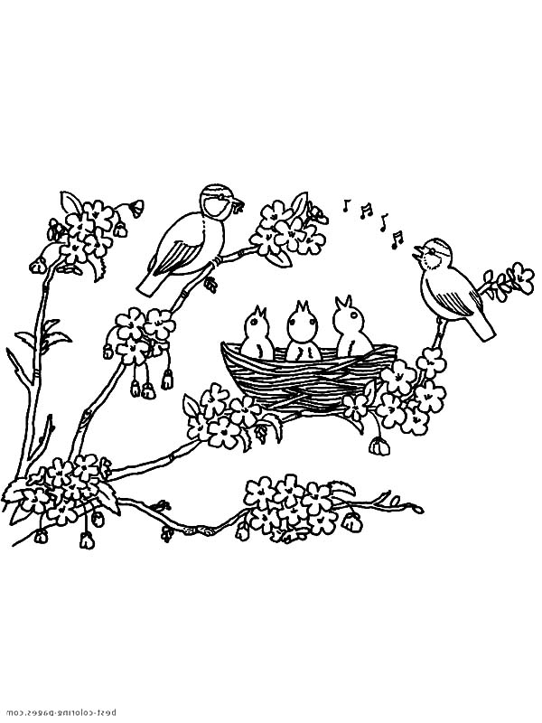 Bird Nest On Blooming Flower Three Coloring Pages : Best ...