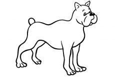 Drawing Boxer Dog Coloring Pages Best Place To Color