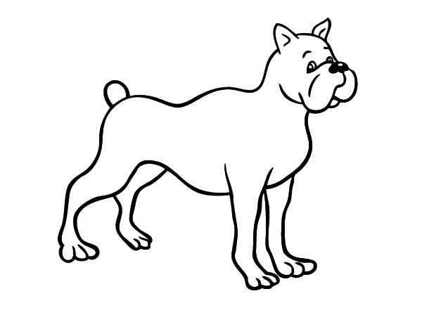 Drawing Boxer Dog Coloring Pages