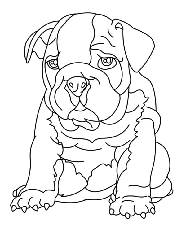 Drawing Bulldog Coloring Pages : Best Place To Color