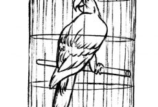 Parrot Cute Bird Cage Coloring