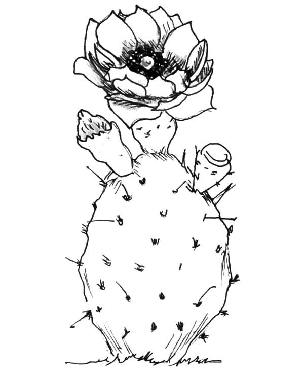 Planting Cactus Coloring Pages Best Place To Color
