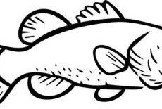 Texas Largemouth Bass Fish Coloring Pages Best Place To Color