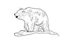 Brown Bear Outline Coloring Pages : Best Place to Color