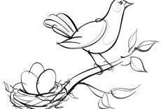 Little Rabbit Saw Bird Nest And Baby Bird Coloring Pages Best Place To Color