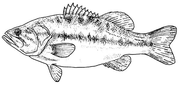 Texas largemouth bass fish coloring pages best place to for Fish mouth template
