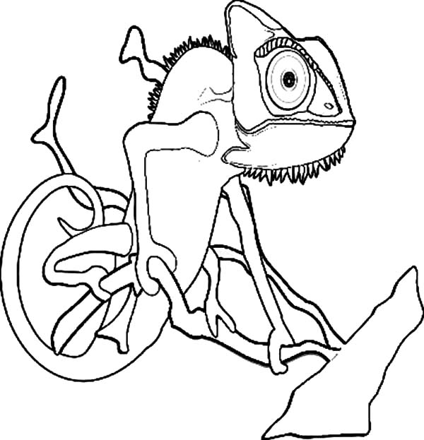 Chameleon Coloring Pages - Learny Kids