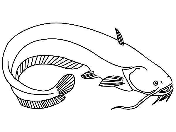 catfish coloring pages - photo#22