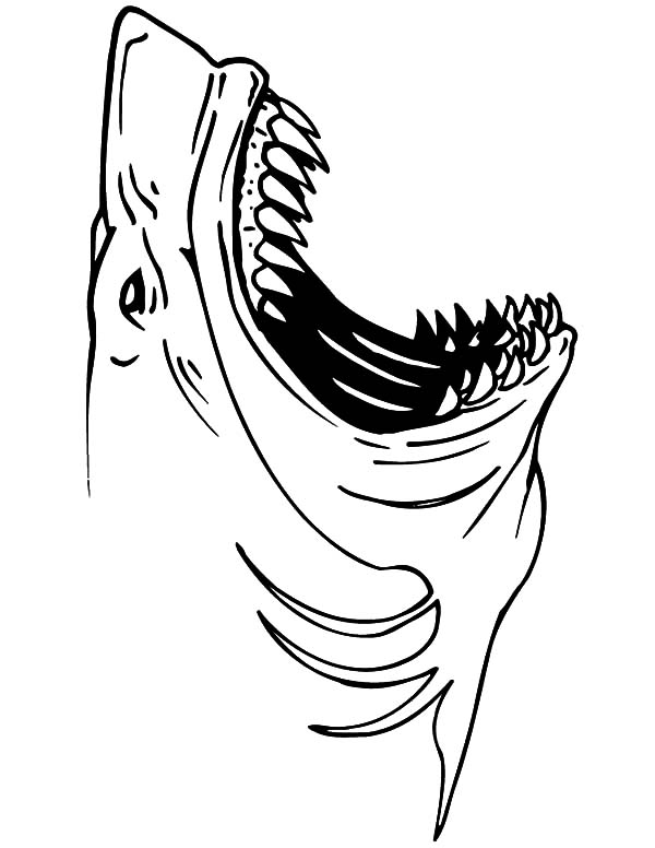 Great White Shark Jaws Coloring