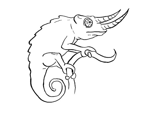 chameleon coloring pages free | Long Nosed Chameleon Coloring Pages : Best Place to Color